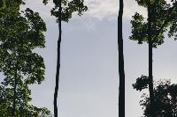 Летний день в богородицком парке, Фото: 20