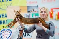 """Выставка """"Пряничные кошки"""" в ТРЦ """"Макси"""", Фото: 51"""