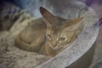 В Туле прошла выставка «Пряничные кошки» , Фото: 82