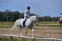 В Ясной поляне стартовал турнир по конному спорту, Фото: 74