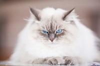 """Выставка """"Пряничные кошки"""". 15-16 августа 2015 года., Фото: 44"""