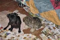 Похищенные собаки, Фото: 7
