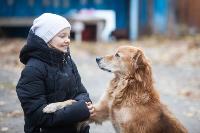 Дворняги, дворяне, двор-терьеры: 50 фото самых потрясающих уличных собак, Фото: 3