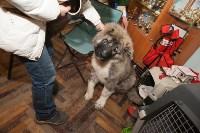 Выставка собак в Туле, 29.11.2015, Фото: 119