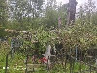 В Черни во время уборки на кладбище могилы завалили спиленными деревьями, Фото: 5