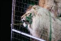 Львы Африки приехали в Тулу, Фото: 101