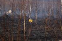 Сразу в нескольких районах Тульской области загорелись поля, Фото: 11
