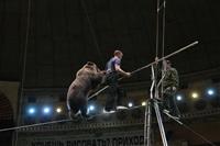 Новая программа в тульском цирке, Фото: 17
