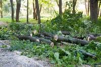 В Баташевском саду из-за непогоды упали вековые деревья, Фото: 4