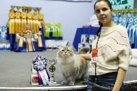Выставка кошек, Фото: 7