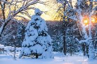 Снежное Поленово, Фото: 81