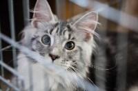 В Туле прошла выставка «Пряничные кошки» , Фото: 13
