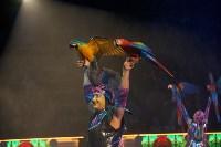 «Шоу Слонов» в Тульском цирке, Фото: 6