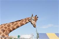 Цирк огромных зверей. Тула, Осиновая гора, 1, Фото: 3