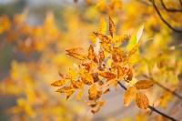 Золотая осень в Тульской области, Фото: 47