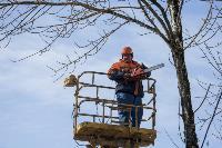 Кронирование деревьев в Туле: что можно, а чего нельзя?, Фото: 18