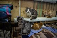 Волонтеры спасли кошек из адской квартиры, Фото: 18