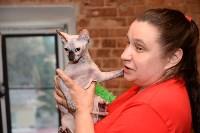 Выставка кошек в Искре, Фото: 26