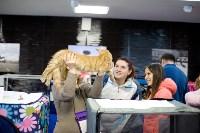 Выставка кошек. 4 и 5 апреля 2015 года в ГКЗ., Фото: 78