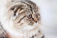 """Выставка """"Пряничные кошки"""". 15-16 августа 2015 года., Фото: 94"""