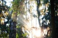 Центральный парк, утро, осень, Фото: 19