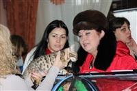 В Туле прошла международная выставка кошек, Фото: 32