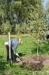 В Пролетарском районе высадили молодые деревья, Фото: 2