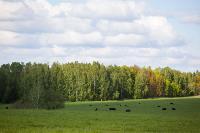 Тишина, солнце и бесконечный простор: 90 красивых фото с родины слонов – Одоевского района, Фото: 50