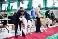 Выставка собак в Туле, Фото: 31