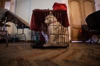Выставка собак в Туле, 29.11.2015, Фото: 43
