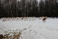 Деревянному лосю восстановили рога, Фото: 4