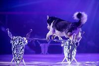Шоу фонтанов «13 месяцев»: успей увидеть уникальную программу в Тульском цирке, Фото: 132