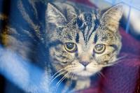 Выставка кошек. 4 и 5 апреля 2015 года в ГКЗ., Фото: 17