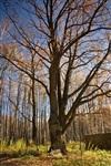 Ясная Поляна, Фото: 1