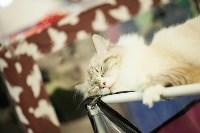 """Выставка """"Пряничные кошки"""". 15-16 августа 2015 года., Фото: 70"""