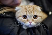 В Туле прошла выставка «Пряничные кошки» , Фото: 33