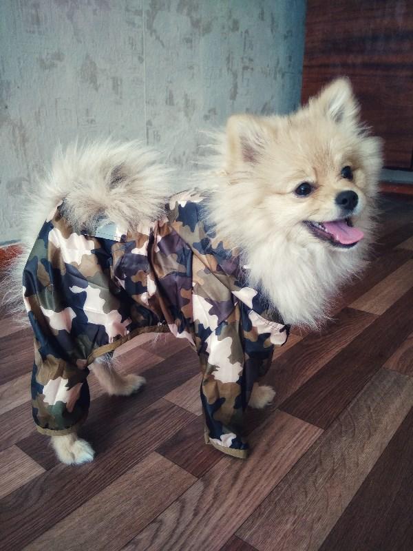 Пёс военного