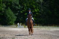 В Ясной поляне стартовал турнир по конному спорту, Фото: 118