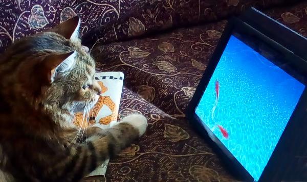 Юннат Антоша наблюдает за рыбками на планшете.