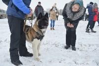 Праздник северных собак на Куликовом поле , Фото: 36