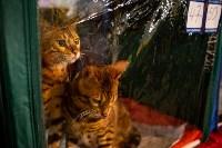Пряничные кошки, Фото: 42