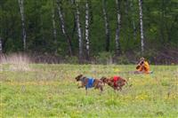 В Туле состоялись собачьи бега, Фото: 32