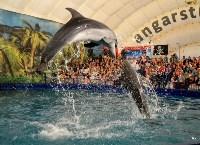 Шоу карибских дельфинов, Фото: 4