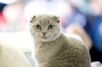 Выставка кошек. 4 и 5 апреля 2015 года в ГКЗ., Фото: 117