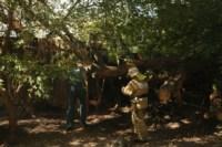Пожар около Фролова, Фото: 2