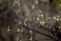 Весна 2020 в Туле: трели птиц и первые цветы, Фото: 24