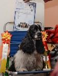 """Выставки собак в ДК """"Косогорец"""", Фото: 70"""