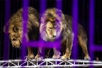 Шоу фонтанов «13 месяцев»: успей увидеть уникальную программу в Тульском цирке, Фото: 211