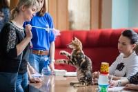 Международная выставка кошек. 16-17 апреля 2016 года, Фото: 55