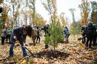 В Центральном парке Тулы появился сосновый бор «Слободы», Фото: 12